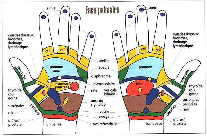 Diapason médical et zone réflexes des mains