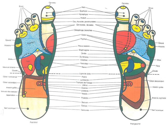 Zone réflexes des pied pour les diapasons
